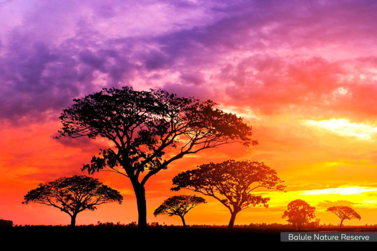 AFRICA: 11 Day Ultimate Game Lodge Tour Including Flights for Two