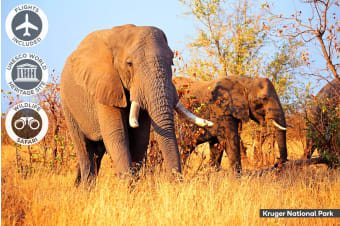 AFRICA: 14 Day Spectacular South Africa Tour Including Flights for Two