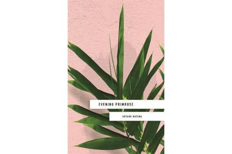 Evening Primrose - a heart-wrenching novel for our times