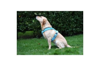 Woofmasta Flashing Hi-Viz Dog Harness (Aqua)