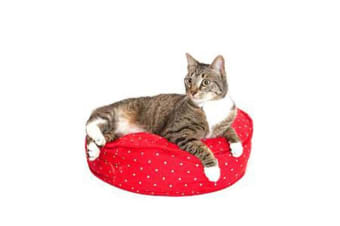 Molly Meow Cat Bed Bird on a Wire