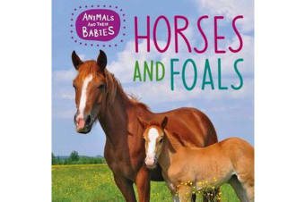 Animals and their Babies - Horses & foals