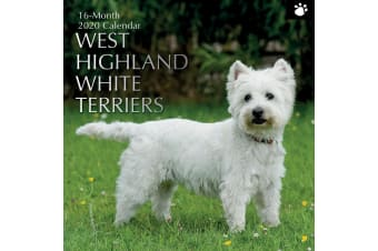 West Highland White Terriers 2020 Premium Square Pets Dog Wall Calendar 16 Month