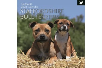 Staffordshire Bull Terriers - 2020 Wall Calendar 16 month PSquare 30x30cm (H)