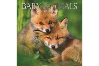 Baby Animals - 2020 Wall Calendar 16 month Premium Square 30x30cm (R)
