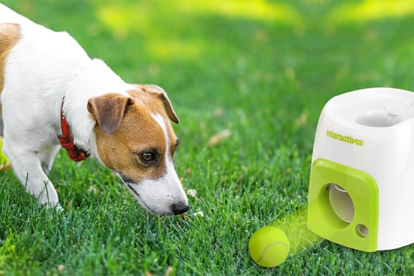 Pawever Pets Fetch & Treat Toy