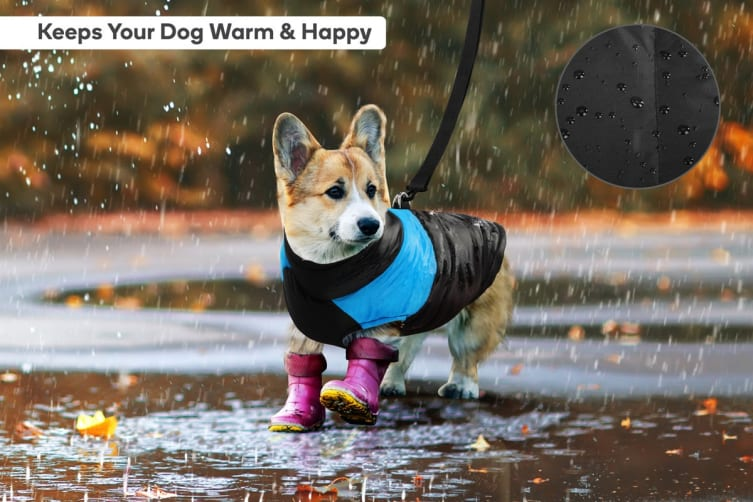 Pawever Pets Water Proof Dog Jacket (Small)