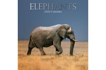 Elephants 2020 Premium Square Animal Wall Calendar 16 Months New Year Decor Gift
