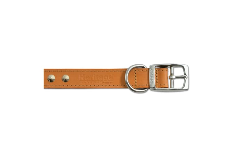 Ancol Pet Products Heritage Studded Dog Collar (Tan) (39-48cm (Size 5))