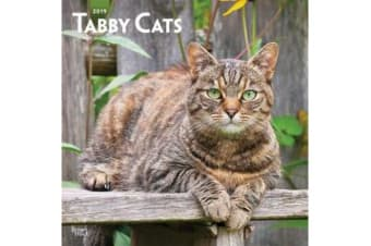 Tabby Cats 2019 Square Wall Calendar