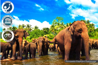 SRI LANKA: 9 Day Private Highlights Tour for Two, Four or Six