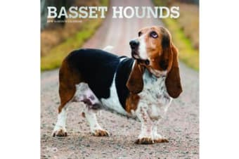 Basset Hounds 2019 Square Wall Calendars