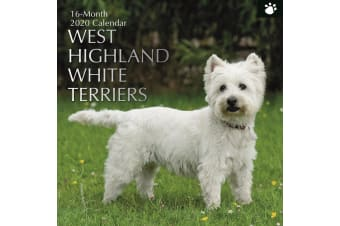 West Highland White Terriers - 2020 Wall Calendar 16 month Square 30x30cm (R)