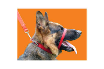 Canny Anti-Pull Dog Collar (Red)