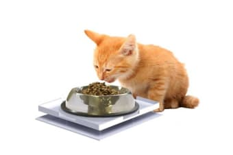 Ant Proof Plate for Pet Bowls, Food & Household Items - Square