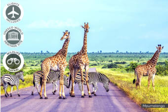 AFRICA:10 Day South African Safari Including Vic Falls & Flights For One or Two
