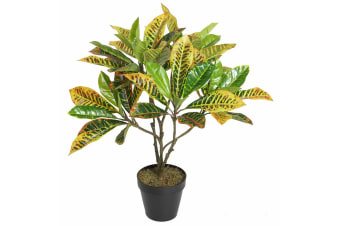 POTTED 65CM CROTON TREE RUSHFOIL