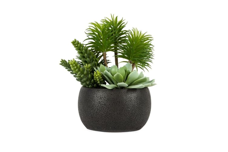 Holly Collection | Mixed Artificial Succulents