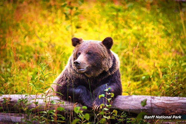 USA: 24 Day East Coast USA, Canada & Alaska Tour Including Flights for Two - (Ocean View Cabin)