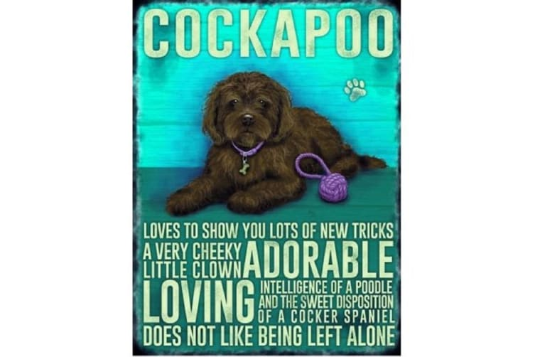 Cockapoo Metal Sign (Brown) (One Size)