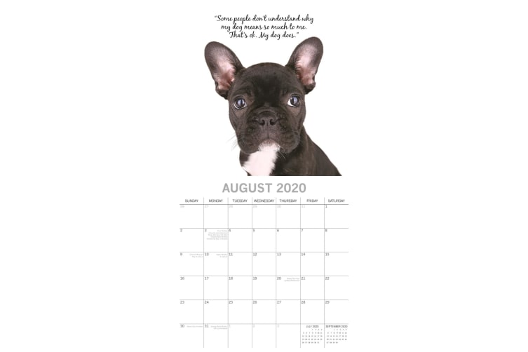 Adorable Dogs - 2020 Square Wall Calendar 16 month by Gifted Stationery (T)
