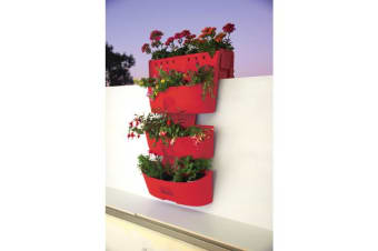 Maze Kamelia Planter Pack (Red)