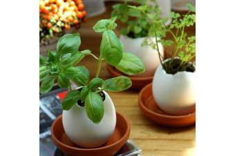 Eggling Crack & Grow Planter Kit with Tray - Basil