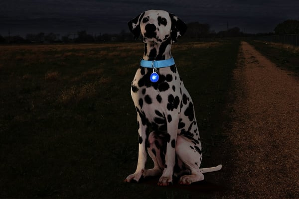 Pawever Pets LED Pendant (Blue)