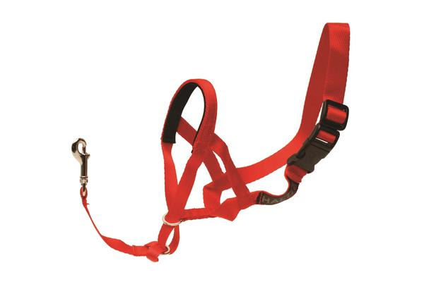 Petlife Halti Head Collar Red - L