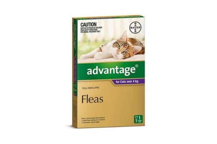 Advantage Cat Large Purple - 4p