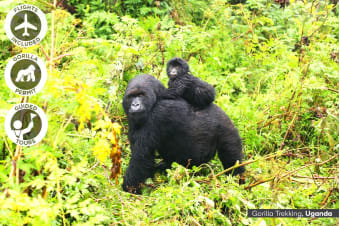 KENYA & UGANDA: 16 Day Gorillas & Wildlife Tour Including Flights for Two