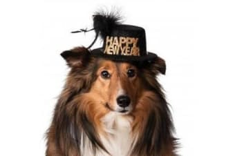 Happy New Year Pet Hat - Medium-large