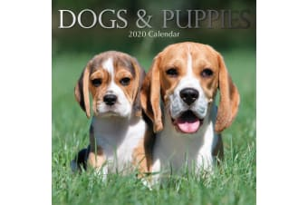 Dogs & Puppies - 2020 Premium Square Pets Wall Calendar 16 Months New Year Decor