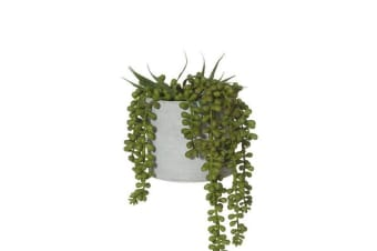 Rogue Artificial String of Pearls w/ Grey Pot 15x15x27cm