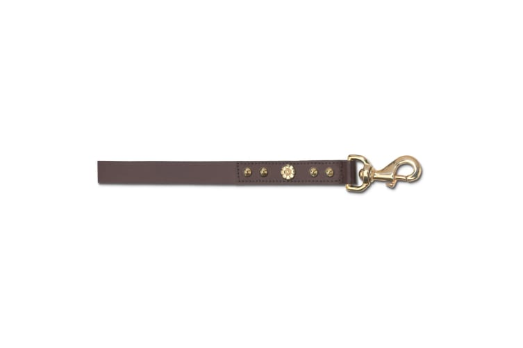 Ancol Pet Products Deluxe Bull Terrier Hamemaker Stud Dog Lead (Brown) (25mm x 60cm)