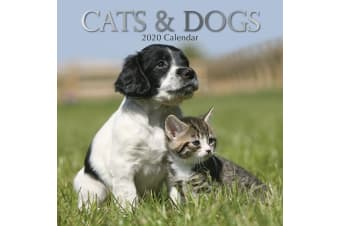 Cats & Dogs 2020 Premium Square Pets Wall Calendar 16 Months New Year Decor Gift