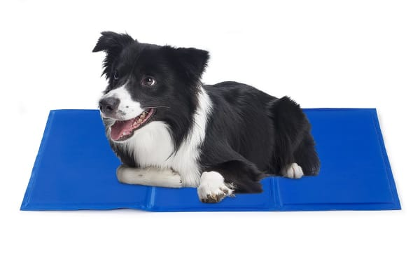 Pawever Pets Cooling Mat (Medium)