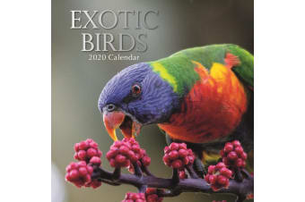 Exotic Birds - 2020 Wall Calendar 16 month Premium Square 30x30cm (E)