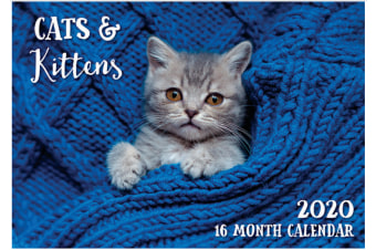Cats & Kittens - 2020 Rectangle Wall Calendar 16 Months by Biscay (A)