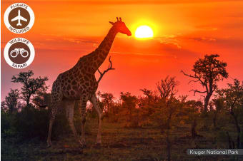 SOUTH AFRICA: 11 Day South African Safari Tour Including Flights For Two