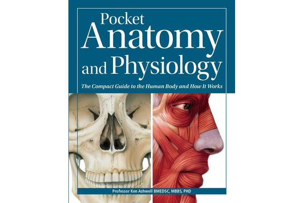 comparing the anatomy and physiology of a In order to understand how that happens, it is necessary to understand the anatomy and physiology of the heart location of the heart the human heart is located within the thoracic cavity, medially between the lungs in the space known as the mediastinum.