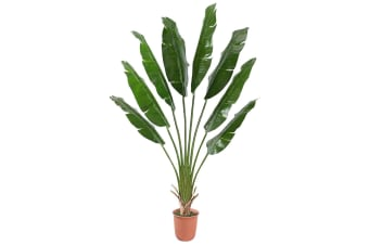 Artificial Travellers Palm Tree 210cm