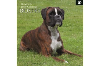 Boxers 2019 Premium Square Wall Calendar 16 Months New Year Christmas Decor Gift