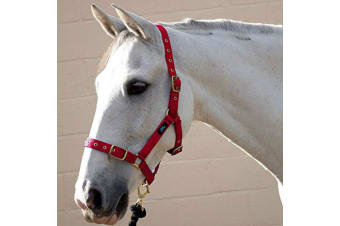 Hy Holly Fully Adjustable Head Collar (Red) (Full)
