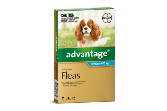 Advantage for Dogs 4-10 kgs - 4 Pack - Teal - Flea Control Treatment (Bayer)