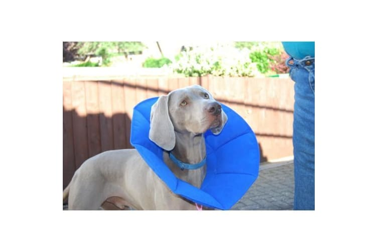 MDC Pet Products Soft Dog E-Collar (Blue) (31cm)