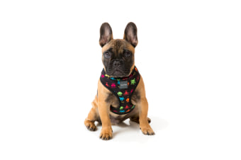 Space Raiders X-Large FuzzYard Dog Harness - 55 to 80cm Chest / 43cm Neck