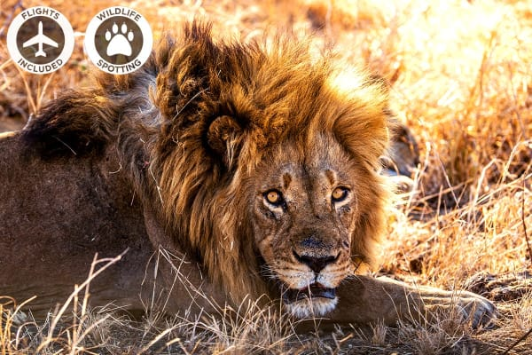AFRICA: 20 Day Africa Tour Including Flights (For One)