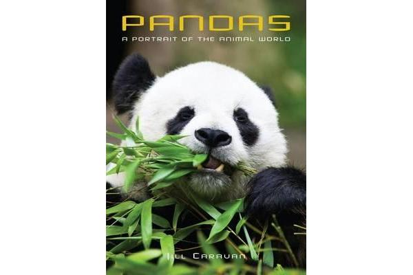 Pandas - A Portrait of the Animal World