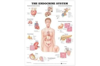 The Endocrine System Anatomical Chart